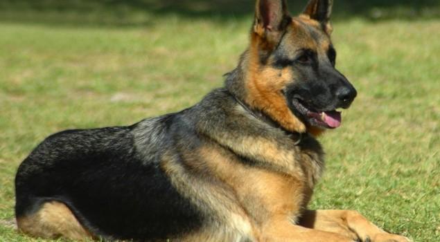 Cegah Peredaran Narkoba, Ditjen PAS Akan Akuisisi Anjing Pelacak