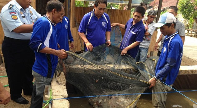 WBP Rutan Rantau Panen 60 Kg Ikan Lele