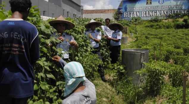 Pondok Asimilasi Rutan Rangkasbitung Panen Raya 3 Jenis Komoditas Perkebunan