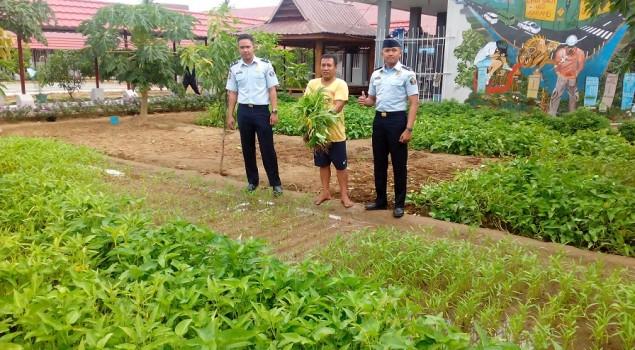 Rutan Pinrang Panen Sayur Kangkung Organik