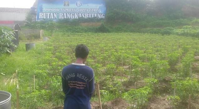 Cabai Rawit Pondok Asimilasi Rutan Rangkasbitung Ingin Tembus Pasar Lokal