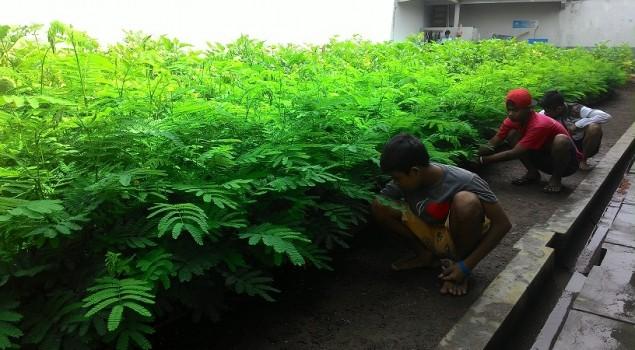 Anak LPKA Kutoarjo Lakukan Pembibitan Pohon Albasia