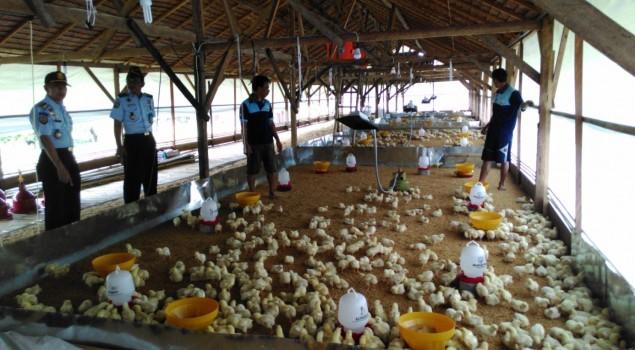 Peternakan Ayam Lapas Palopo Gandeng Pihak Ketiga