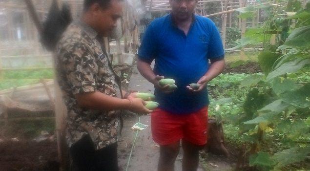 Panen Perdana, Sayur Hasil Pertanian Lapas Sukamiskin Banjir Pesanan