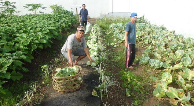 WBP Rutan Bangli: Menanam Sayuran = Menanam Kebaikan
