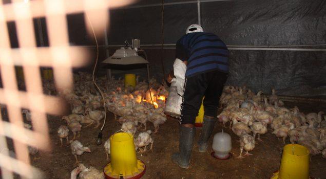 Lapas Pekanbaru Kembali Panen Ayam Potong