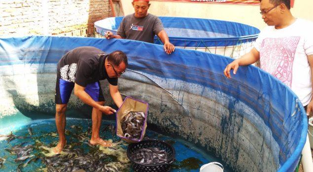 Bapas Yogya Panen 400 Kg Lele Dengan Sistem Biofloc