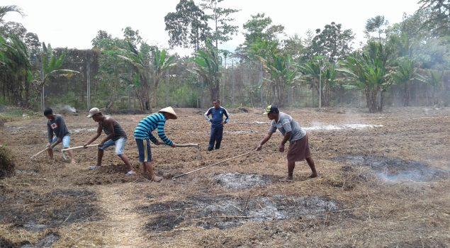 Lapas Piru Kelola Semak Belukar Jadi Lahan Pertanian