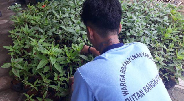 Rutan Rangkasbitung Genjot Pengembangan Pondok Asimilasi