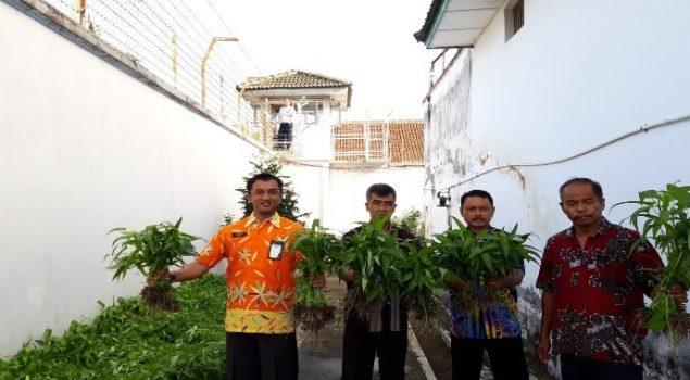 Usai Panen Sawi, Rutan Wates Juga Panen Kangkung