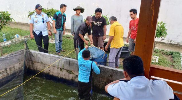 WBP Lapas Pekanbaru Panen 630 Kg Ikan Lele