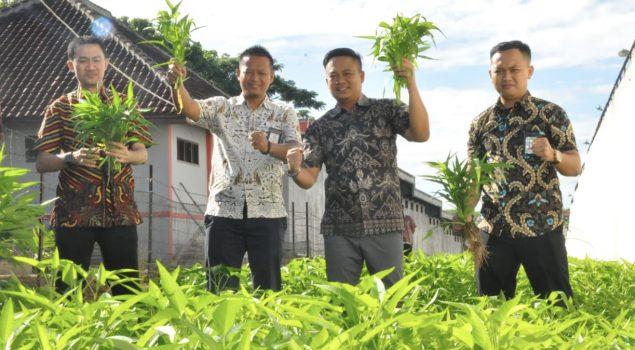 Tanami Lahan Branggang, Rutan Kotabumi Panen Sayuran Segar