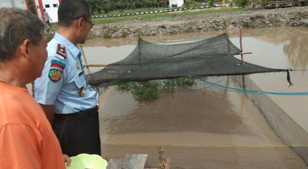 Kalapas Sarolangun Sebar 2.000 Benih Ikan Nila Super
