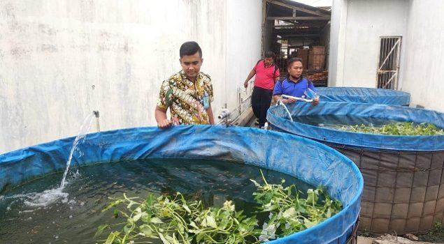 Rutan Pemalang Budidayakan Ikan Nilai dengan Sistem Bioflok
