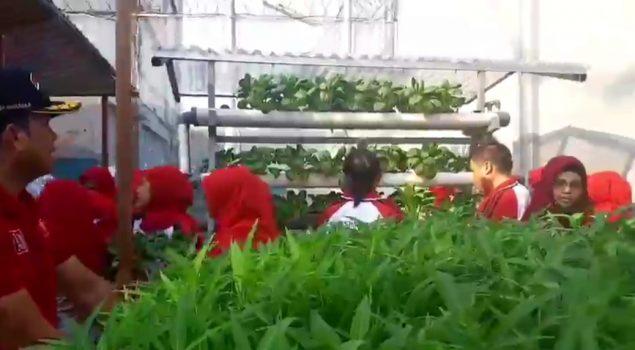 LPN Jakarta Nikmati Panen Sayuran & Buah