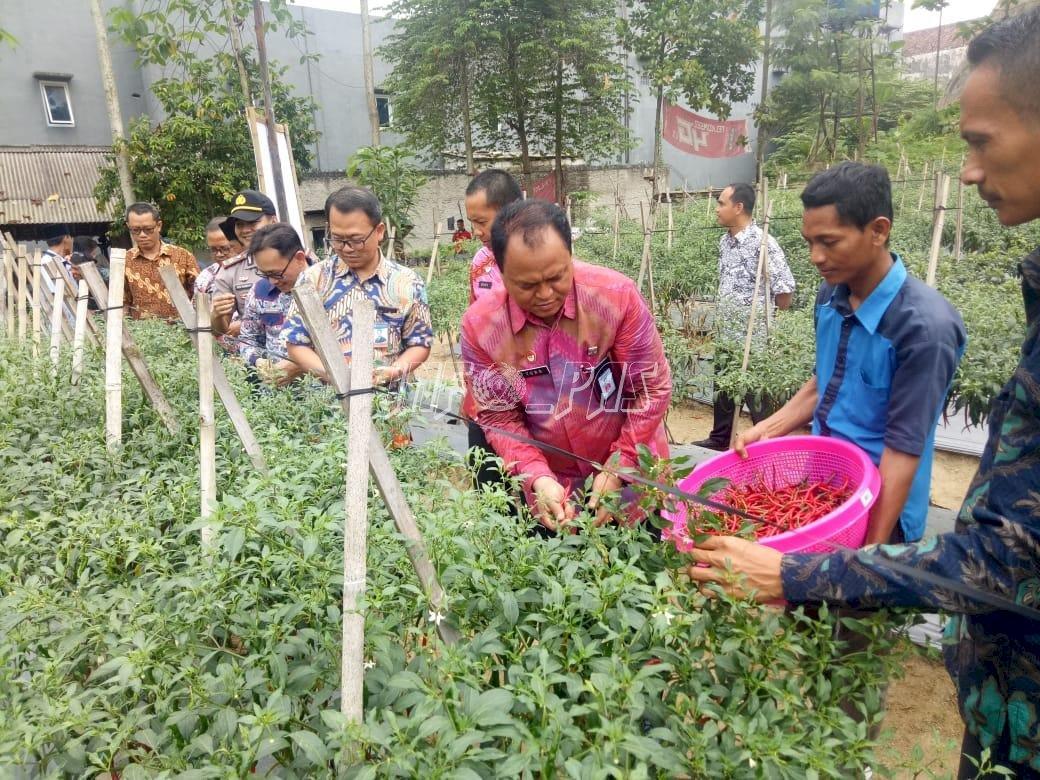 Panen Perdana Pertanian,  Bukti Keberhasilan Pondok Asimilasi Lapas Rangkasbitung