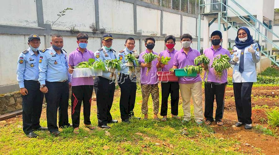LPKA Jakarta Panen Hasil Perkebunan Hidroponik