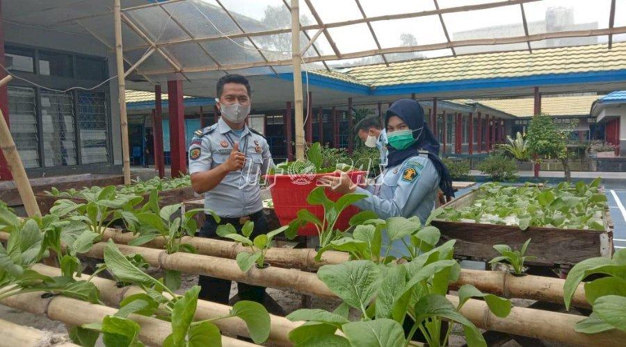 Rutan Buntok Kembali Panen Sayuran