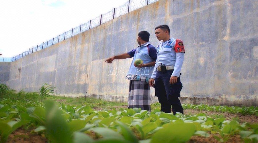 Rutan Banda Aceh Panen Sayur Pakcoy
