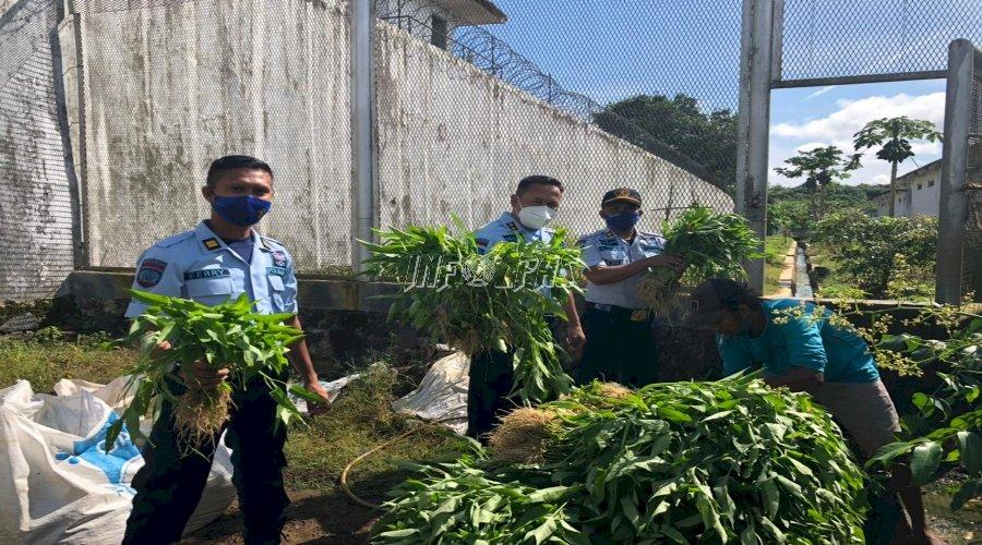 WBP LPN Karang Intan Panen Hasil Kebun