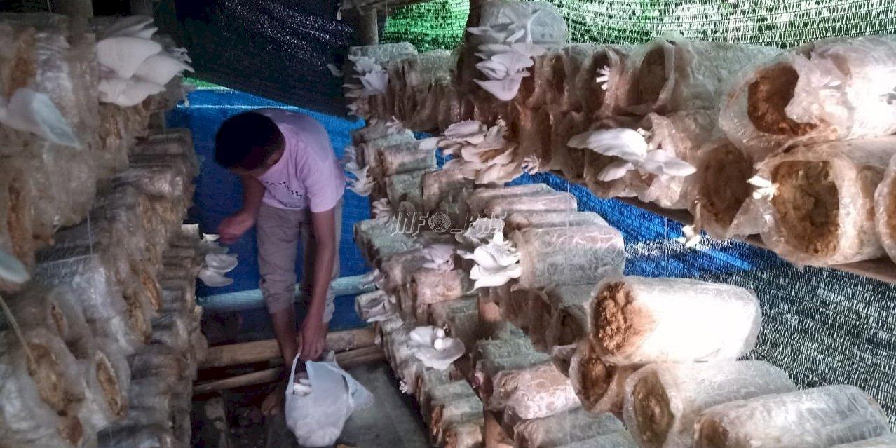 Jamur Tiram Produksi Rutan Selayar Laris di Masyarakat